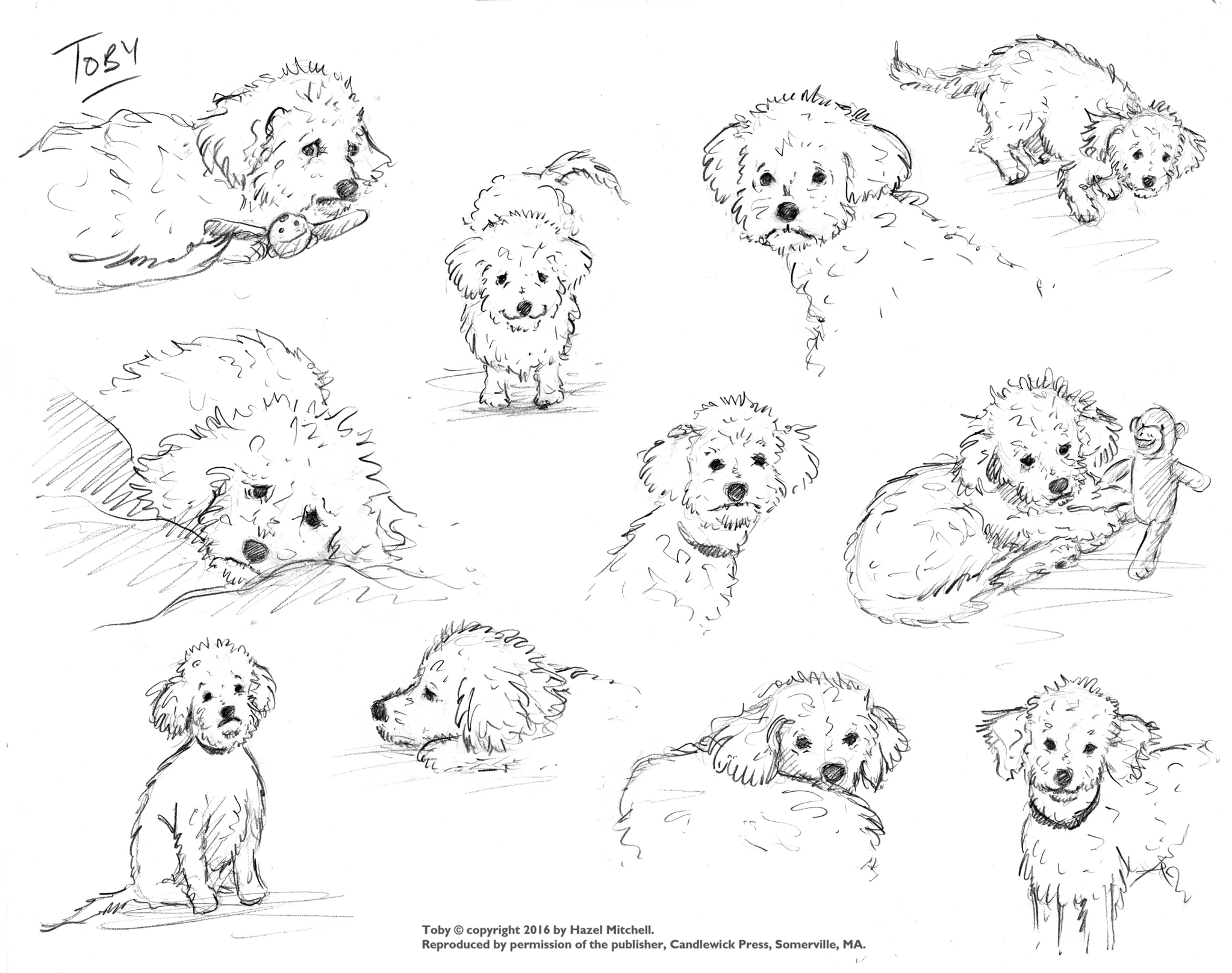 Toby realistic sketches