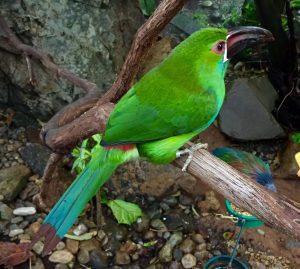 #2 GREEN BIRD IGNORING CAMERA